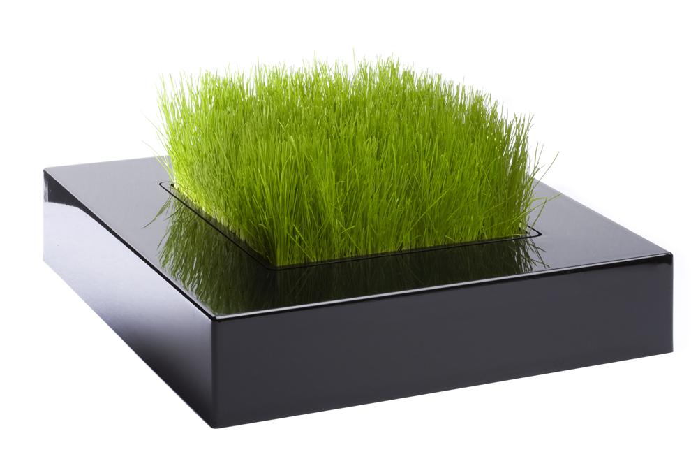 le pot de gazon chlorophile le carr de verdure du balcon poteries et bacs plantes. Black Bedroom Furniture Sets. Home Design Ideas
